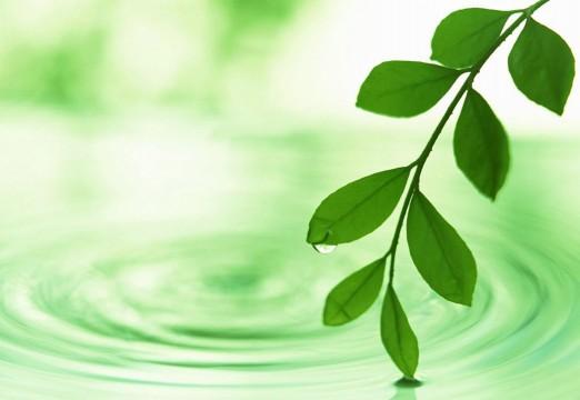 green-spring-leaf-1998511-o